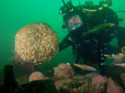 Rodrigo inspecting a gun on the Duart Point wreck
